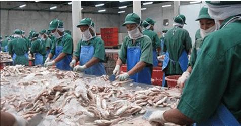 الصناعة السمكية