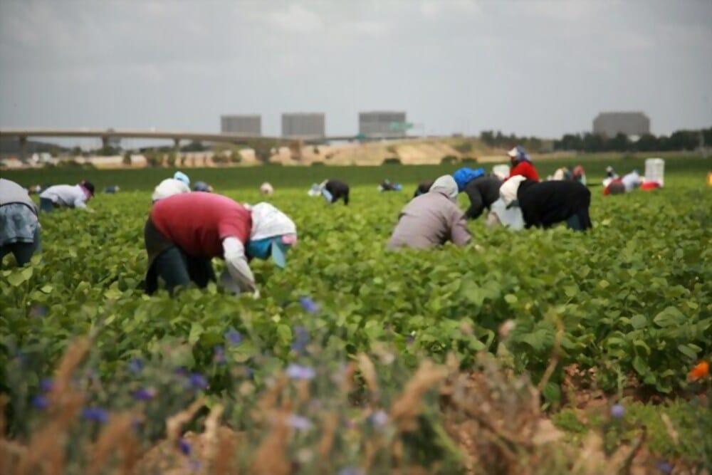 العمل الموسمي في المغرب