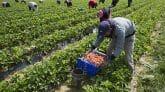 saisonniers agricoles espagne 1