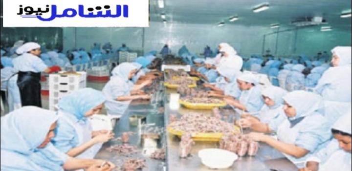 مستجدات الخدمة : تشغيل 35 عامل وعاملة بمصنع للمنتجات البحرية بمدينة العيون